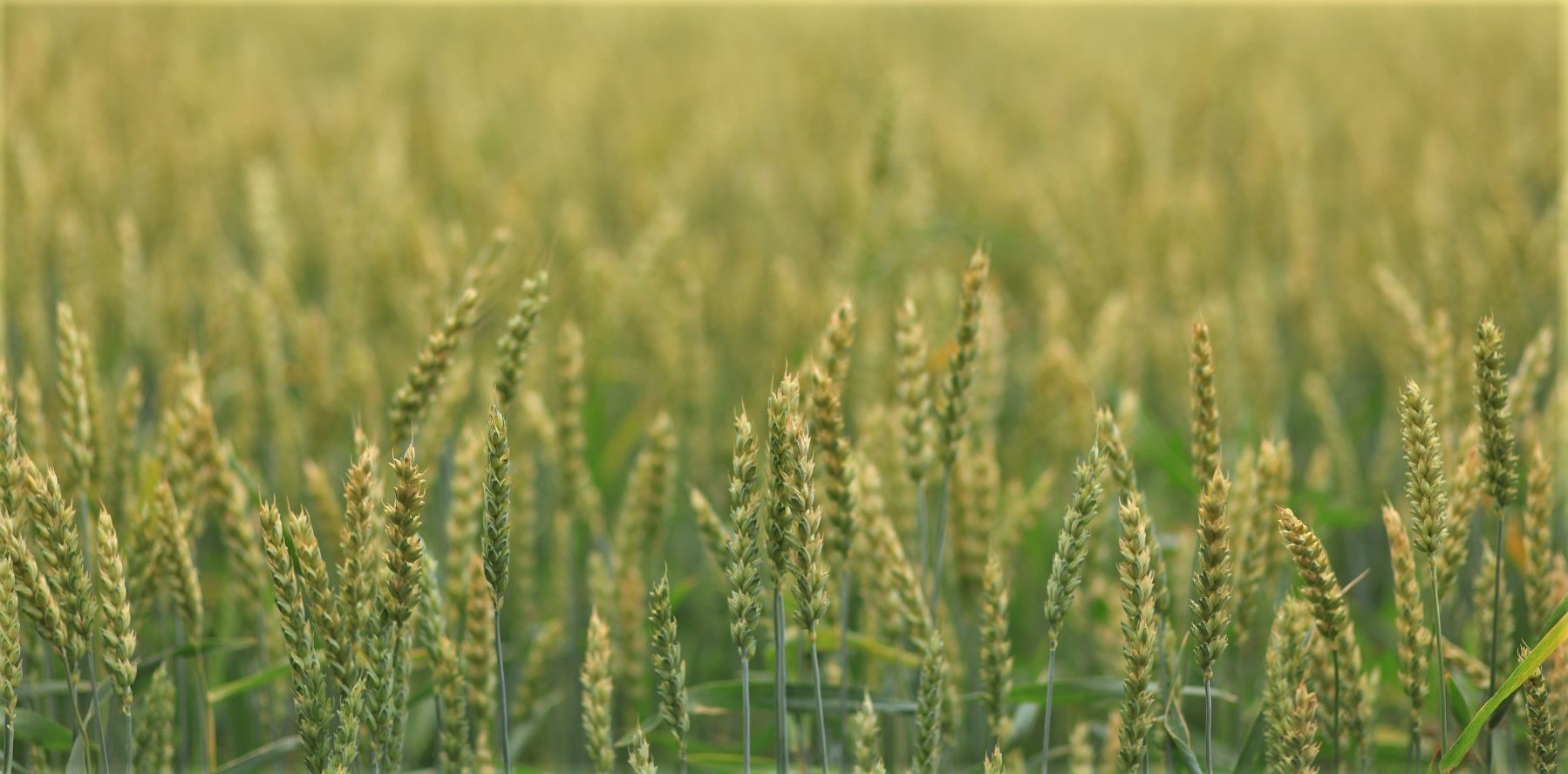 Stakeholders say Global Burden of Crop Loss would help direct future agricultural policy and practice